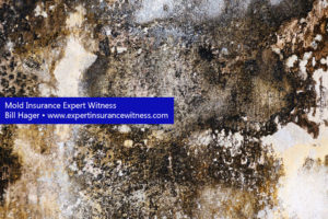 Witness Insurance Expert Mold